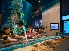 Enjoy S$10 off a pair of One-Day S.E.A. Aquarium Adult Pass with MasterCard