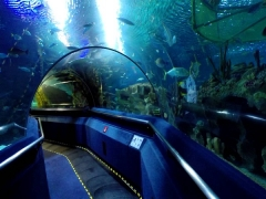 RM5 Off Aquaria KLCC Admission Ticket this Ramadhan Season
