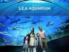 Enjoy 15% off Admission Ticket to S.E.A Aquarium with Citibank Cards
