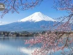 Japan: Cherry Blossom Tour