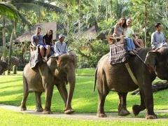 Bali: Elephant Ride & Show