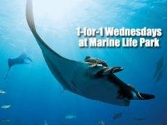 1-for-1 Wednesday Marine Life Park Promo