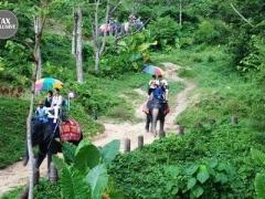 Phuket: Elephant Ride & Animal Show
