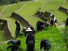 4D3N HANOI-SAPA Tour Package