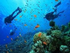 3D2N Paya Beach Spa & Dive Resort