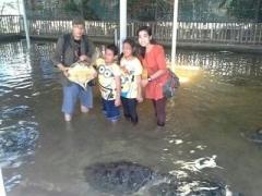 BALI Turtle Island & Blue Ocean Tour