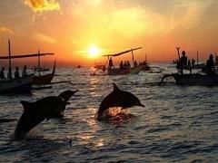 Sunrise & Meet-A-Dolphin at Lovina Beach