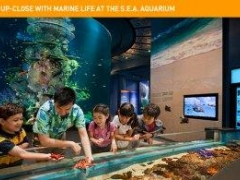 S.E.A. Aquarium One-Day Passes, Exclusive 30% savings and other privileges from MasterCard