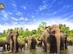Sri Lanka: Cultural Tour