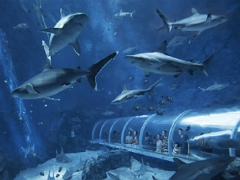Mastercard® Exclusive: S.E.A. Aquarium Adult One-Day Tickets at S$28 (Min. 2 to go)