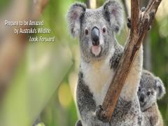Prepare To Be Amazed By Australia's Wildlife with Garuda Indonesia