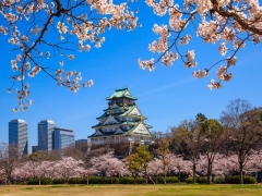 Tuesday Friend Fares to Japan with Cathay Pacific from SGD578