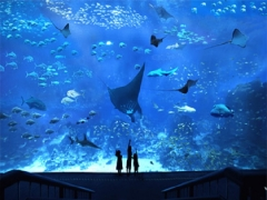 Have a Close to Nature Experience in S.E.A. Aquarium with UOB Card