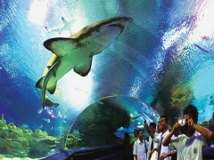Get 10% Off Admission Ticket to aquariaKLCC with Walks and Tours Map