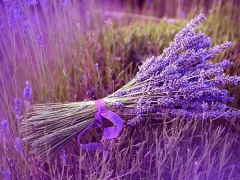Lavender Package in Swiss-Belhotel Rainforest Bali