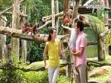Enjoy 10%* OFF Admission Ticket to Singapore Zoo with NTUC Card
