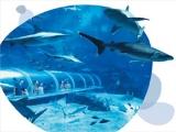 Enjoy $8 off S.E.A. Aquarium Adult Annual Pass at $80 (U.P. $88)