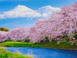 Fly to Tokyo in Style with All Nippon Airways