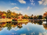 Discover South Korea with Singapore Airlines