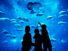 Mastercard Exclusive: S.E.A. Aquarium Adult One-Day Ticket + Blue Mini Octopus Plush at SGD36
