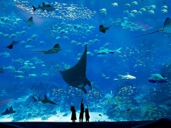 Complimentary SGD5 S.E.A Aquarium Meal Voucher with UOB Card