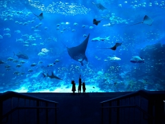 Special Perks for MasterCard Holders in S.E.A. Aquarium™