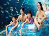 Adventure Cove Waterpark Adult One Day Ticket + Free Solero Ice Cream at SGD34