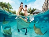 Mastercard® Exclusive: Adventure Cove Waterpark Adult Dated One-Day Ticket + SGD5 Meal Voucher & Free Plush at SGD38