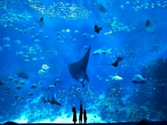 S.E.A. Aquarium at SGD40 for HSBC Cardholders