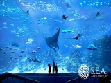 SGD 30 for S.E.A. Aquarium Admission Exclusive for NTUC Cardholders