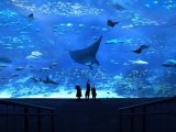 Buy S.E.A Aquarium Ticket at Child Price with DBS Card