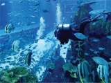 S.E.A. Aquarium Adult One-Day Ticket at SGD36