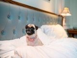Pet-friendly Staycation Package in Intercontinental Singapore