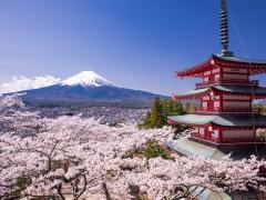 10D9N Sakura Special Flight to Tokyo (Singapore > Haneda > Singapore)