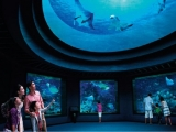 Mastercard® Exclusive: S.E.A. Aquarium Adult Dated One-Day Ticket at SGD41