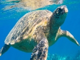 Sea Turtle Room Package at Resorts World Kijal