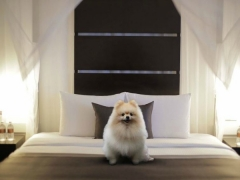 Exclusive Pampered Paws In-room at Amara Sanctuary Resort Sentosa