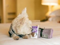 Regent Pet Staycation at Regent Hotels & Resorts