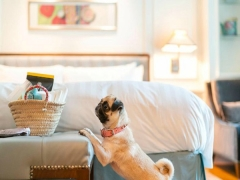 Paw-fect Staycation at InterContinental Singapore