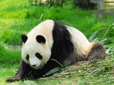 Book a flight from Singapore to Chengdu