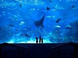 Resorts World Sentosa: S.E.A. Aquarium - Enjoy 10% savings every time you book a VIP Experience with your CIMB Mastercard Card