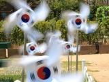 8D Awesome Korea Jeju