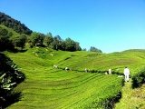 3D Cameron Highlands