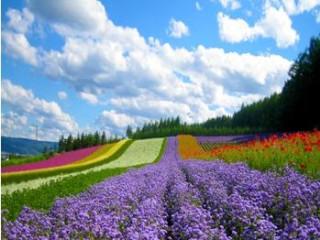 7D5N Colourful Hokkaido