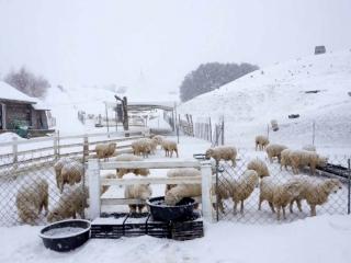 8D6N Snowy Korea + Jeju Incheon