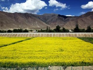 10 Tibet Linzhi Lhasa Mt. Everest Tour