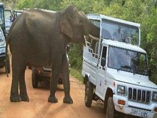 7D6N Sri Lanka Nature Trail