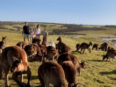 5 Days Adelaide Kangaroo Island Experience {Daily Departure}
