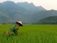 4D3N Ho Chi Minh - Cu Chi Tunnels - My Tho - Mekong Delta