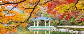 8D6N Southern Beauty Of Korea (Sep -Mar20)